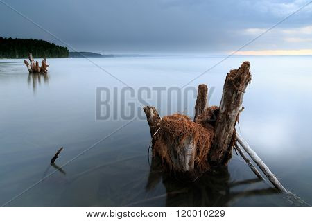 old snags on the lake, russian nature, lake and thunders
