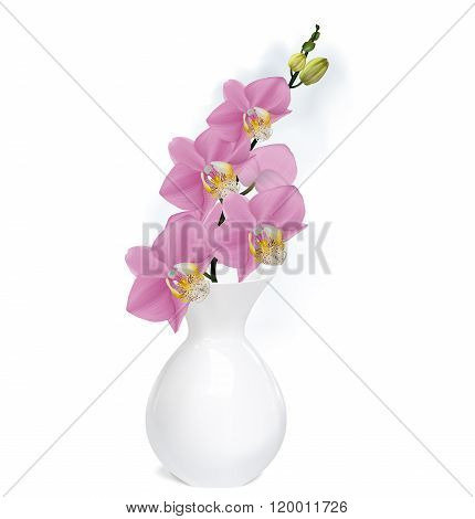 Orchid Branch With Buds In White Vase. Vector Illustrator