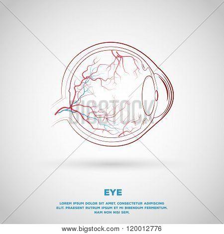 Outline eye plan with vessels. Illustration for school, institution or presentation.