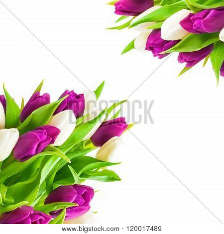 Tulips, Greeting Card