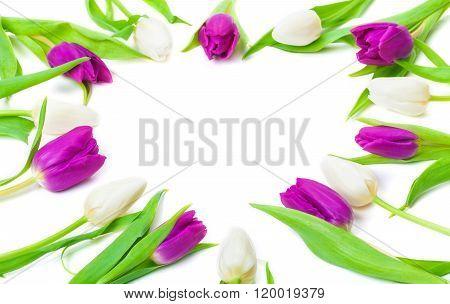 Tulips, Heart