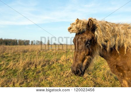 Portrait Of A Light Brown Icelandic Horse In A Nature Reserve