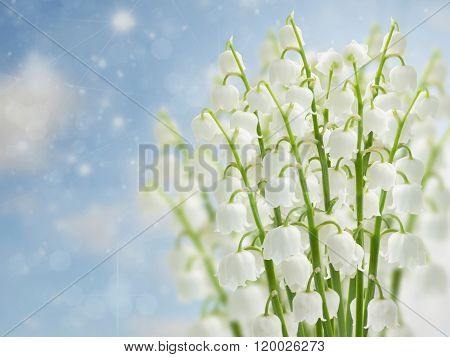 lilly of the valley flowers