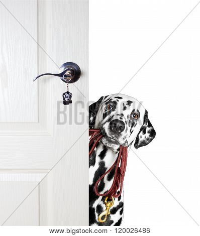 Dog With A Leash Peeks Out From Behind The Door