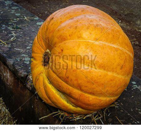 Autumn Pumpkins On A Concrete Curb