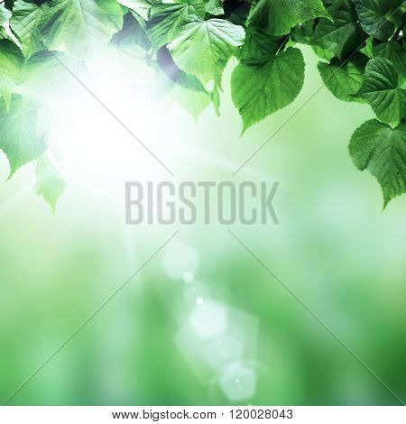 spring forest trees leaf. nature green wood sunlight backgrounds.