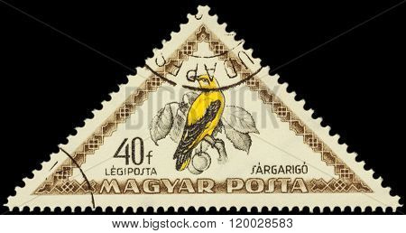 Bird Eurasian Golden Oriole (oriolus Oriolus) On Postage Stamp