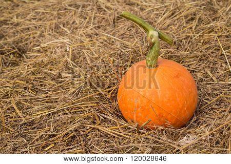 Pumpkins On Straw.