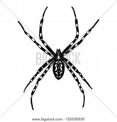Illustration Of Black And White Spider. Argiope Bruennichi. Vector Illustration.