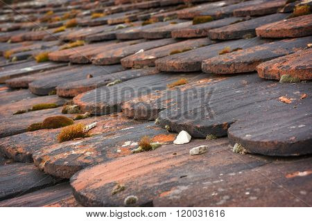 Old Roof, Roof Clapboards