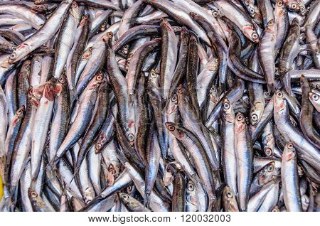 Anchovies For Sale