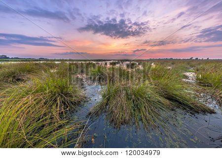 Marsh Landscape With Pastel Colors