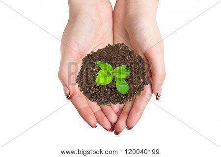Female hands keep a heap of earth with a sprout. Concept advertisement product, isolated over white