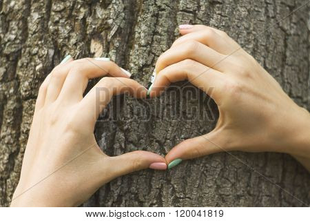 Female hands making an heart shape on a trunk of a tree. Great ec