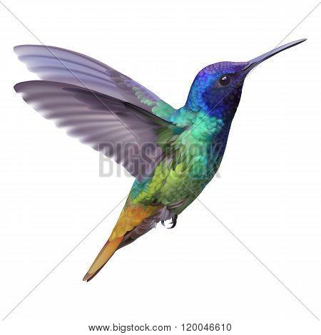 Hummingbird - Golden tailed sapphire