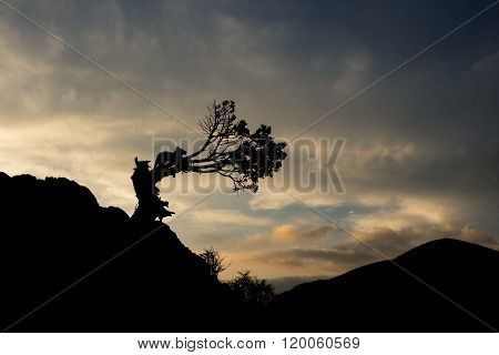 a bent tree silhouette