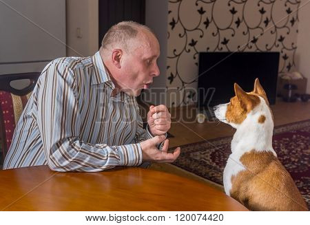 Mature man having nervous conversation with basenji dog