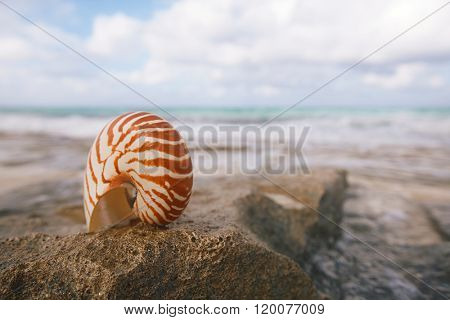 nautilus sea shell on  beach with waves in  soft sunlight, shallow dof