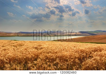 RURAL LANDSCAPE SUMMER.Between Apulia and Basilicata:Farmhouses surrounded by grain fields. Lake Bas