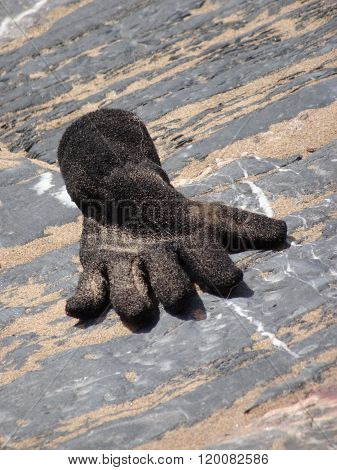 Disguarded Glove Upon Pathway