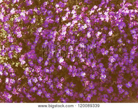 Retro Looking Flowers