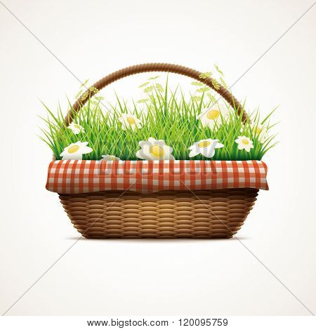 Vector illustration of realistic wicker basket. Grass and daisy flowers in wicker basket. Elements are layered separately in vector file.