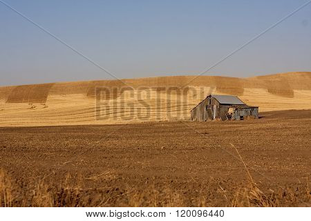 Old Building in a Wheat Field