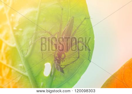 Spider  On A Green Leaf ( Special Color Tone)
