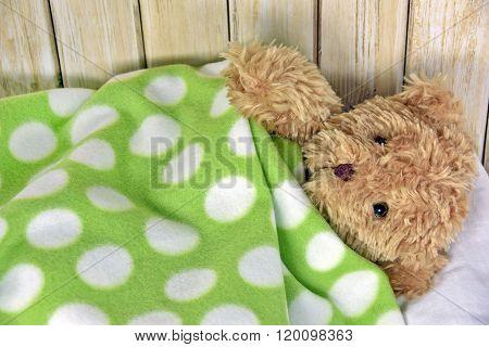 teddy bear under a blanket