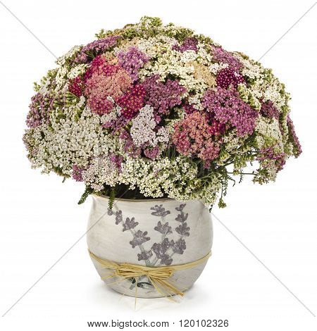 Bouquet Flowers Yarrow In A Vase, Isolated On White Background