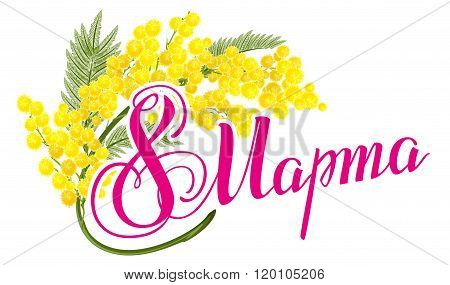March 8 Russian lettering text. March 8 International Womens Day. Yellow mimosa flower. Mimosa flowe