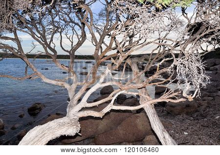 Branches at Bunker Bay, Western Australia