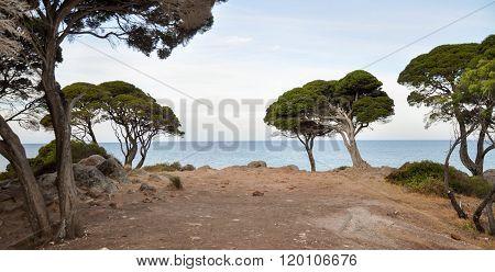 Ocean Views in Shelley Cove