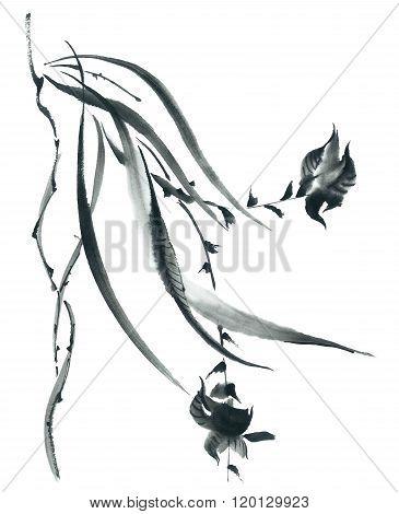 Blossom Orchid. Flowers Illustration..