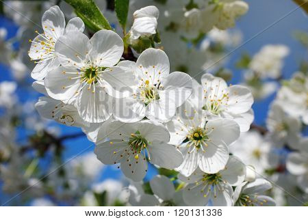 white flowers blooming on branch