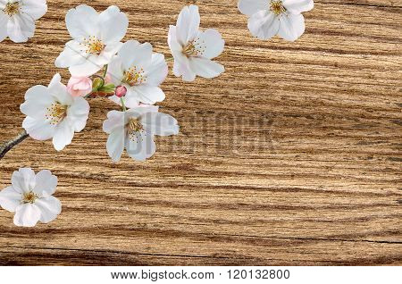 Wood Background With Spring Flowers. Pear Blossom