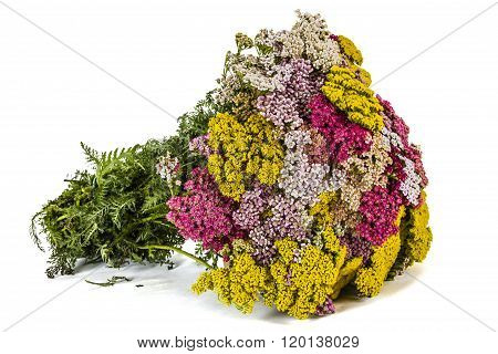 Beautiful Bouquet Flowers Yarrow, Isolated On White Background
