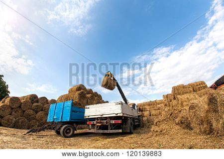 Loading Hay Trailer.