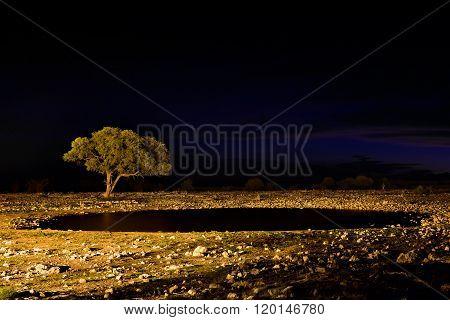 Namibia, Africa, Savannah At Night