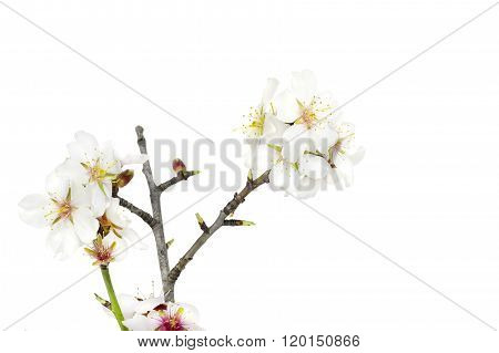 Almond sticks with some flowers.