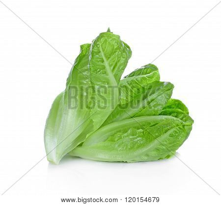 Fresh cos on white background vegetable fiber