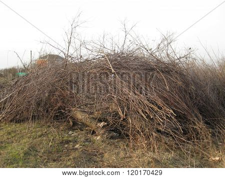 Pile Of Felled Tree Branches