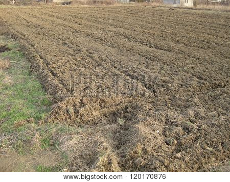Disc Harrow Plow The Garden
