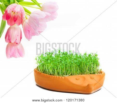 Tulips, Cress