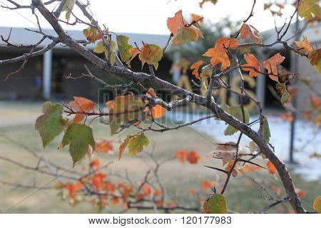 tiny branch with orange leaves during fall