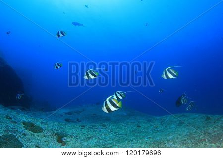 Underwater background with fish in sea