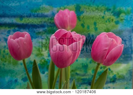 Pink Tulip Flowers On The Bright Background