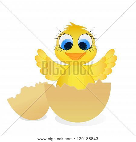 Easter chick. Adorable chick hatched from an egg. Isolated
