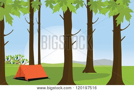 Campsite In Summer Forest