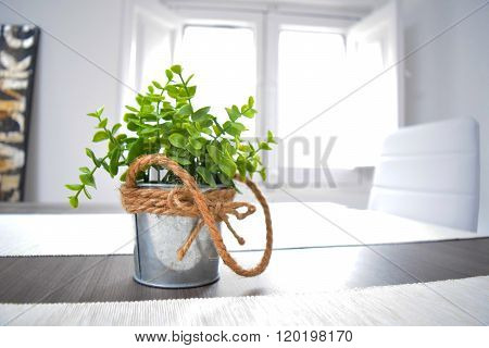 Green plant in a tin pot knotted rope on the wooden table in the sunlight